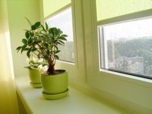 Растения в интерьере квартиры: советы фэн-шуй