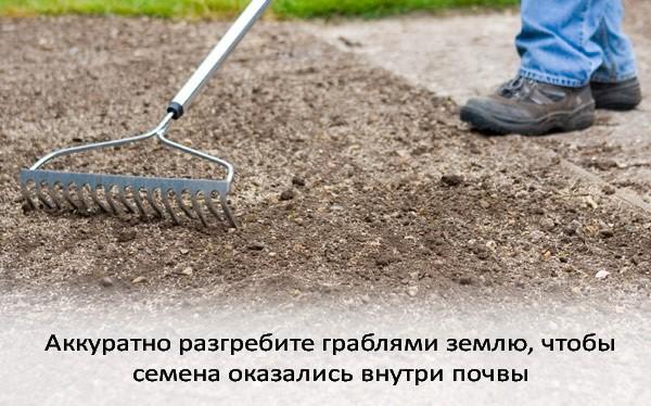 Посев газона своими руками