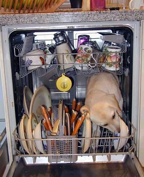 Как выбрать посудомоечную машину отзывы