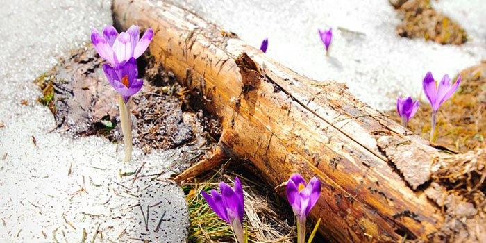работы в саду и в огороде в марте