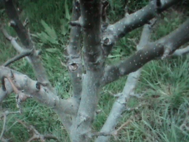 Расположение ветвей