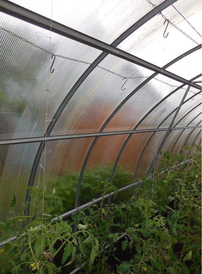 леска для подвески томатов