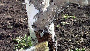 плодовые деревья: защита