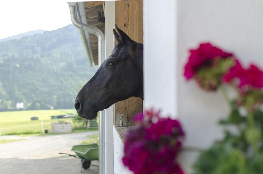 Конюшня: окно и его расположение
