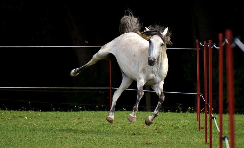 Выгул для лошади на участке