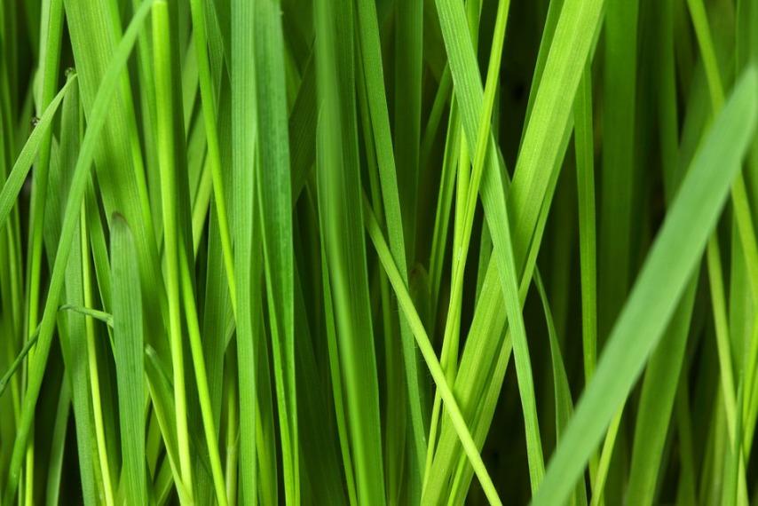 Достоинства рулонного газона