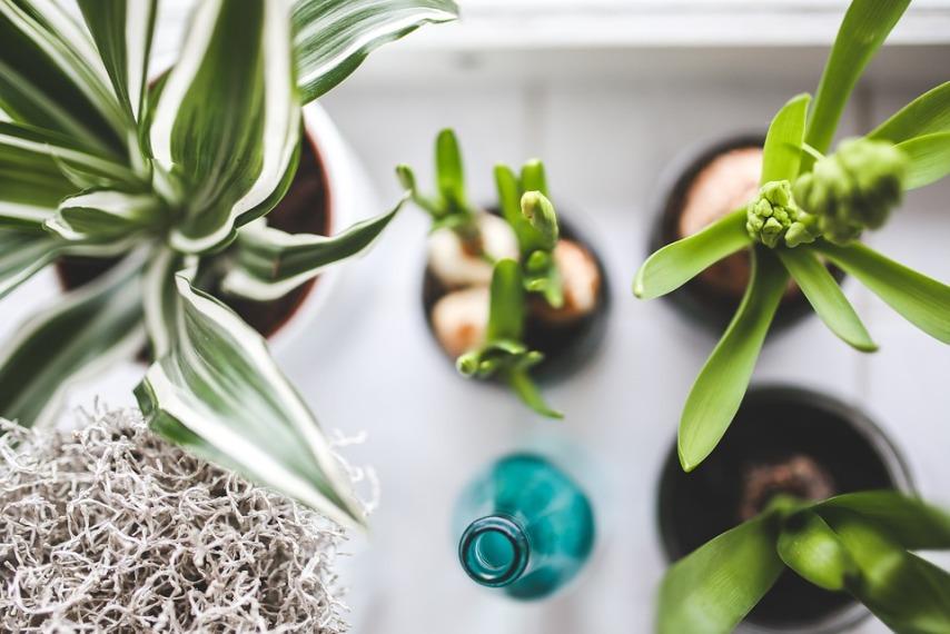 Особенности ухода за комнатными растениями: несколько проверенных советов