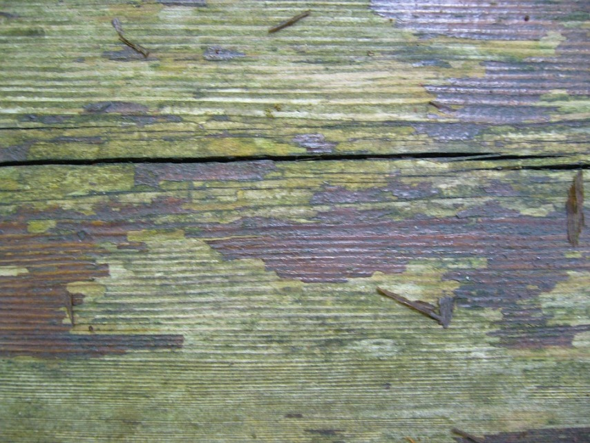Факторы, воздействующие на древесину