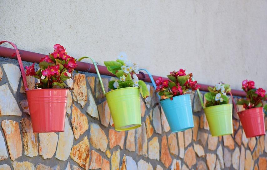 Советы по поливу комнатных растений