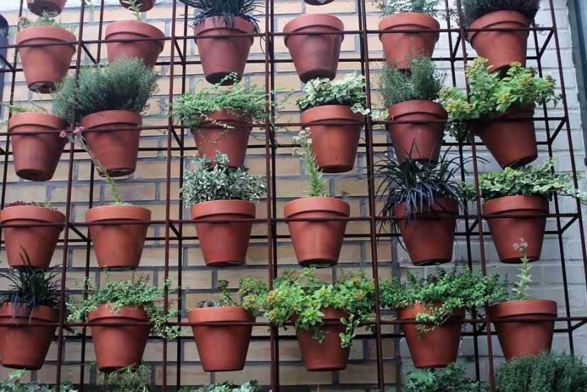 Эффективные советы по поддержанию активного цветения комнатных растений