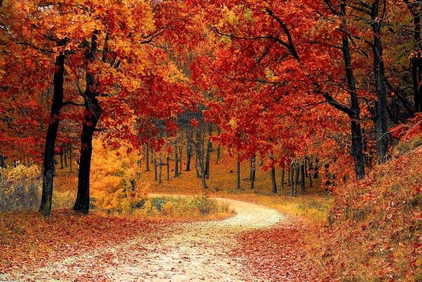 Наступление осени - время убирать листву