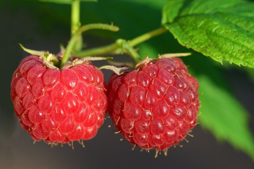 Как ограничить разрастание малины