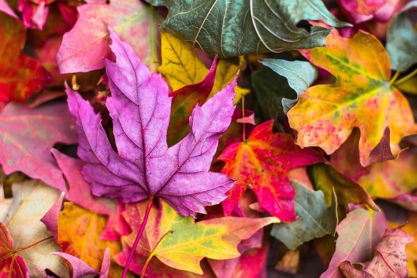 Опавшая листва - методы утилизации