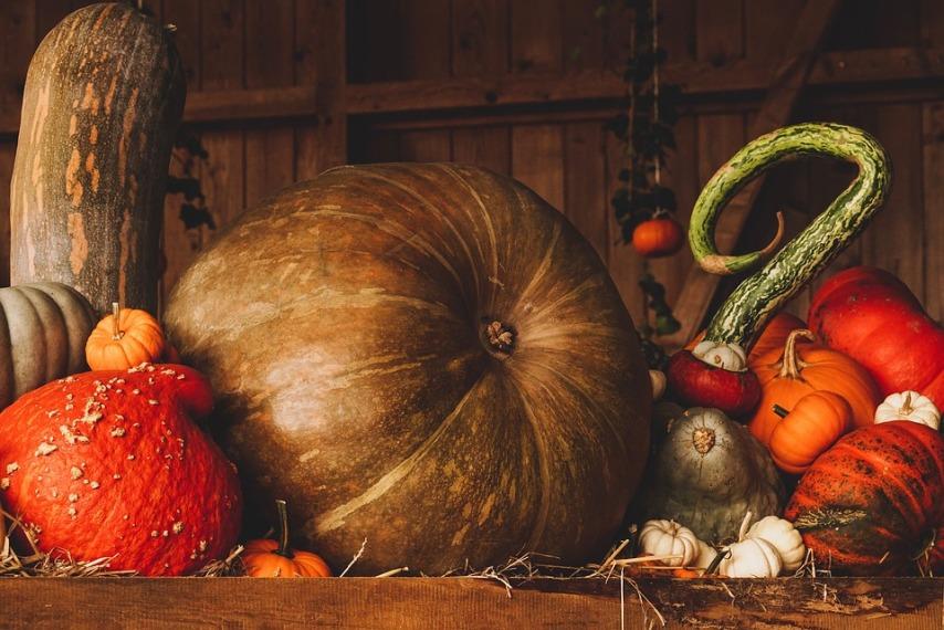 Методы хранения кабачков и тыквы зимой