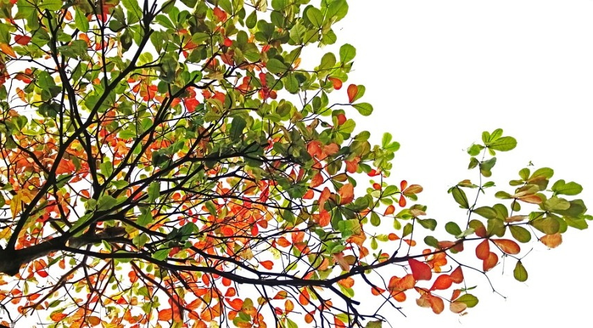 Осенний сбор семян