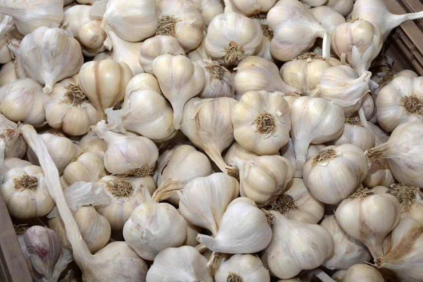 Как получить большой урожай озимого чеснока