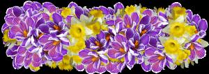 Наиболее популярные цветущие зимой комнатные растения
