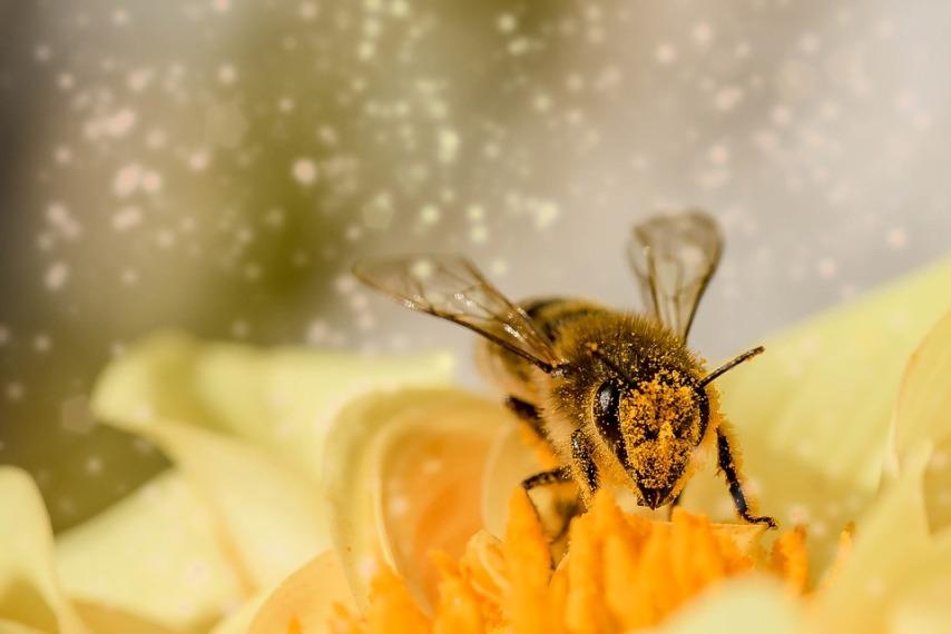 Правила подготовки корма пчелам на зиму