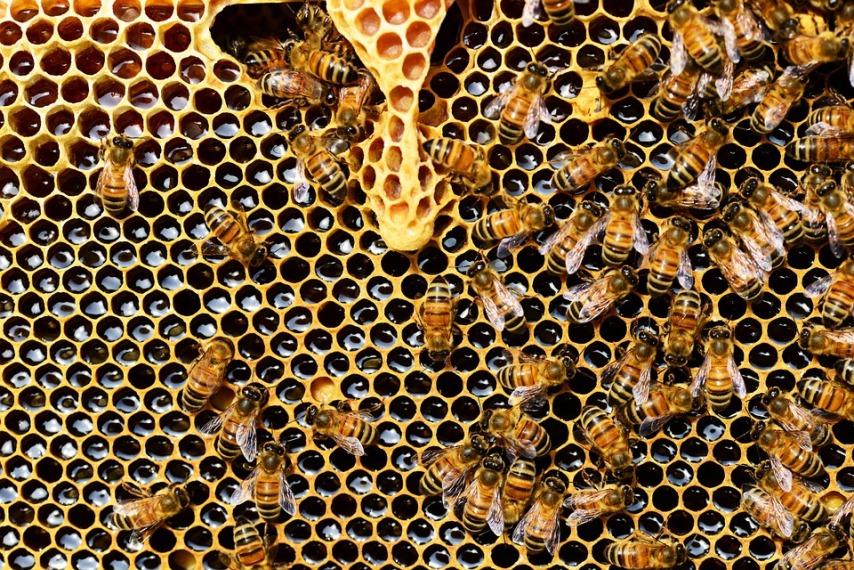 Правильное качество корма для пчел