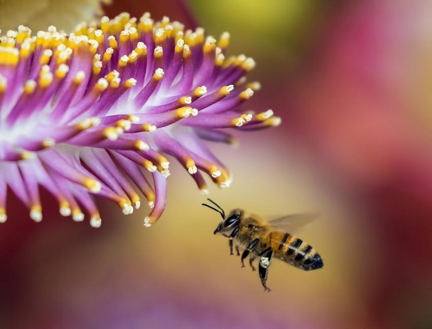 Готовим к зимовке улья и пчел