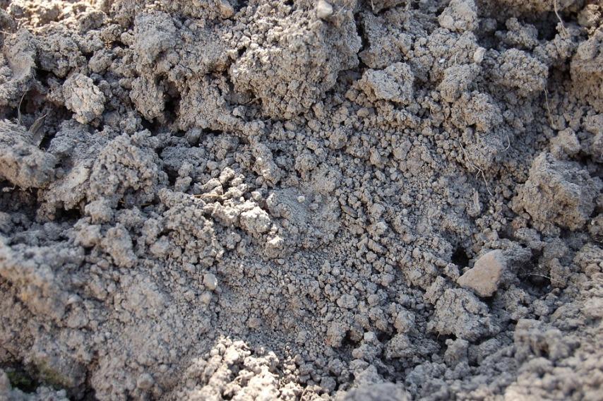 Осенняя посадка лука: готовим почву