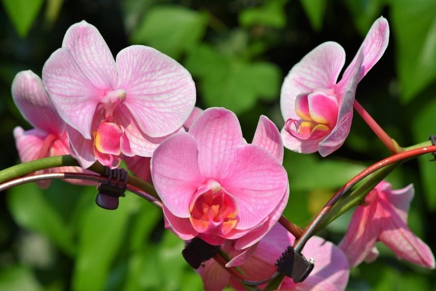 Почему орхидея не цвете?