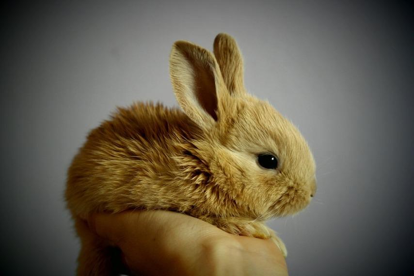 Что следует знать о разведении кроликов