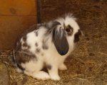Разведение кроликов: питание, содержание, уход