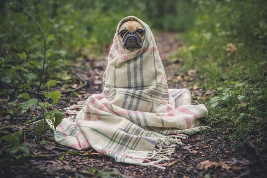 Зимний уход за собакой