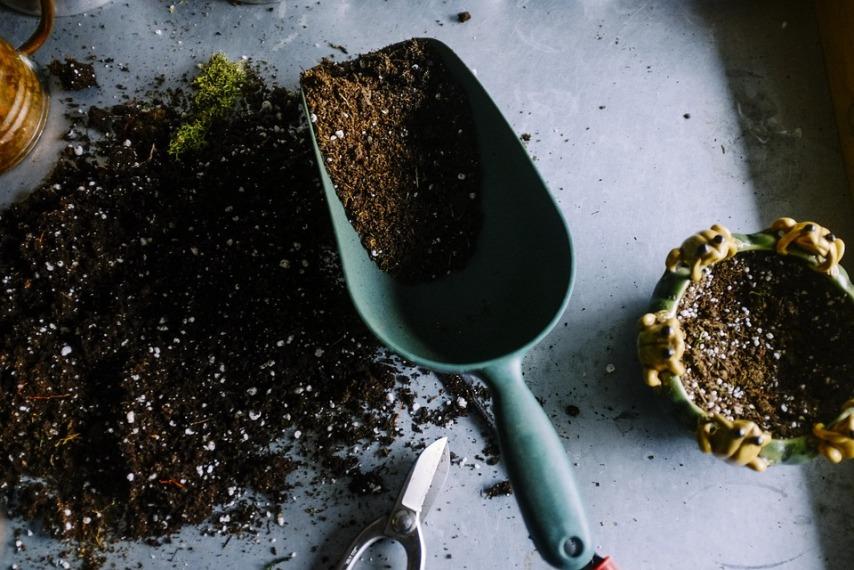 Какой должна быть земля для выращивания пионов