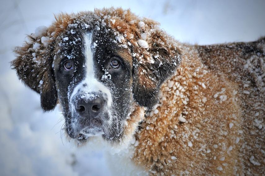 Основы ухода за собакой в зимний период