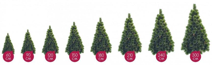 Выбор елки по высоте