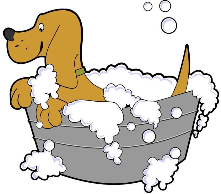 Как часто мыть зимой собаку