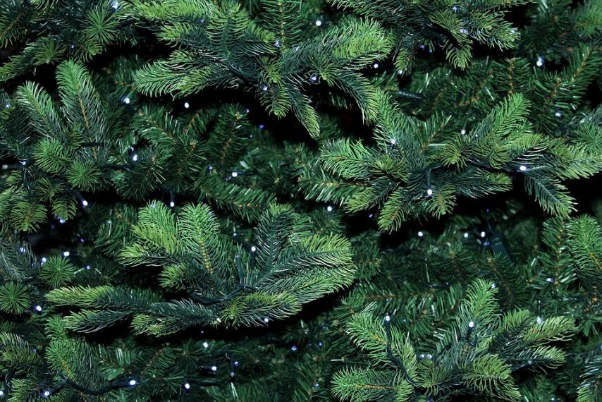 Иголки елки