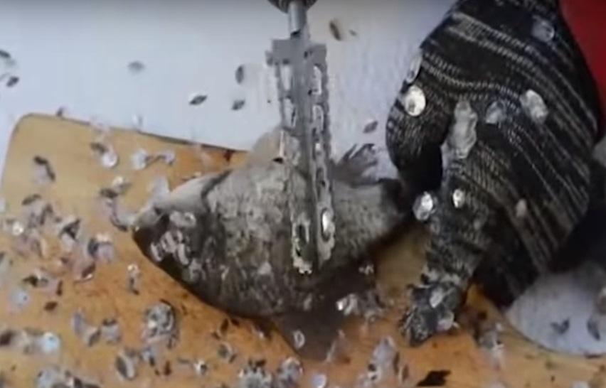 Удаление чешуи с рыбы