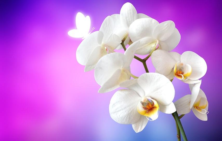 Орхидея для очищения воздуха