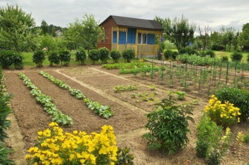 Первая грядка начинающего садовода: грамотно планируем участок