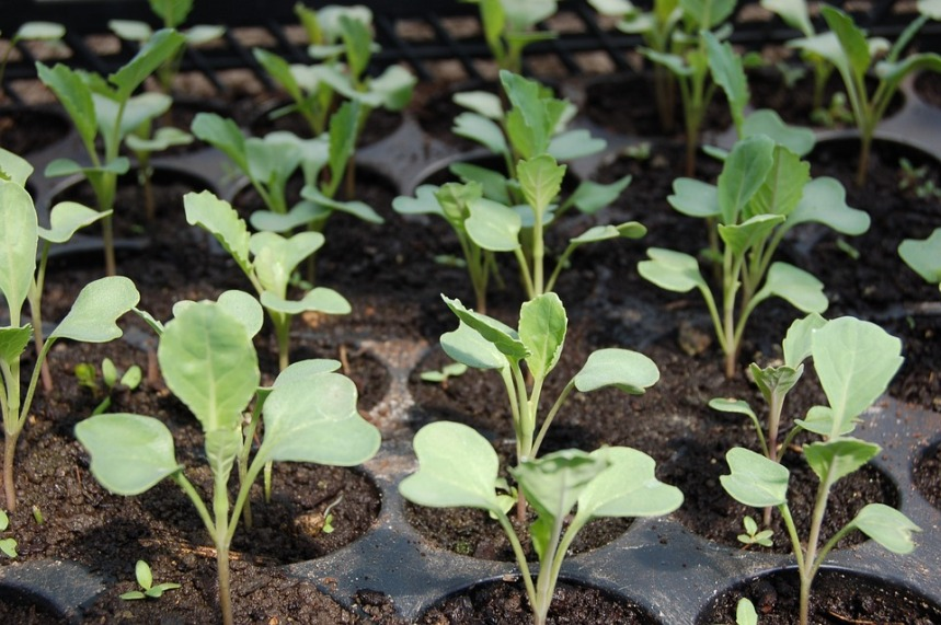 Облегчим свой труд на участке: как планировать огород и сад