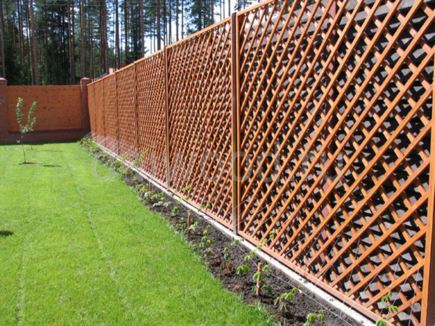 Забор в качестве шпалеры
