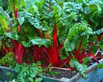 Как можно осваивать землю и обустраивать огород