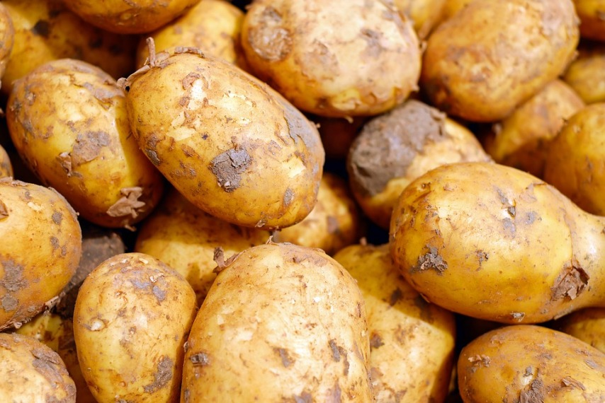Картофель подходит для выращивания новичками