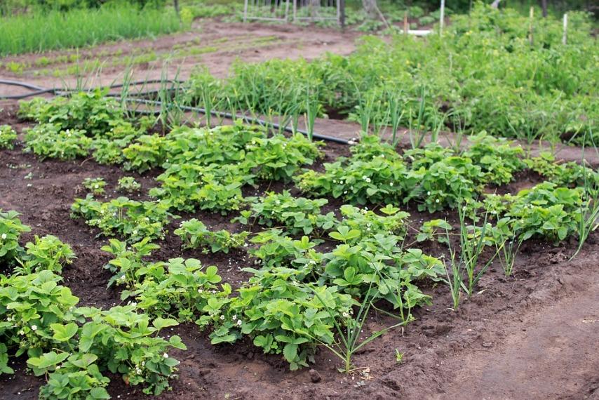 Определяем состав и кислотность почвы