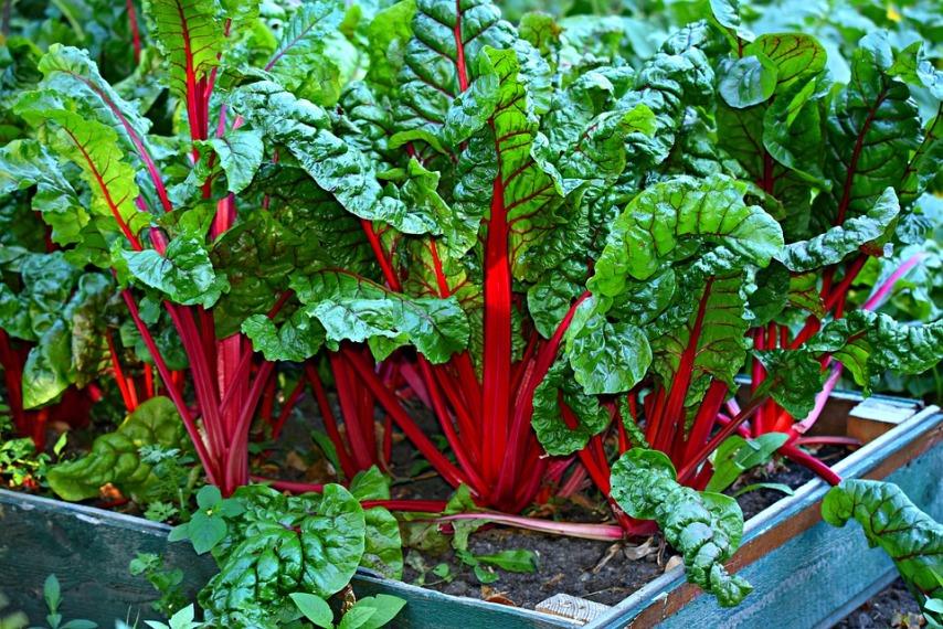 Превый опыт в садоводстве