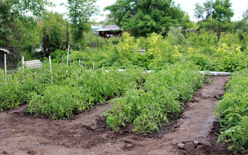 Обустройство огорода и формирование грядок