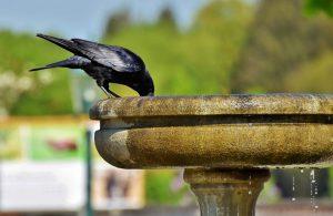Как с помощью фонтана обустроить уголок отдыха