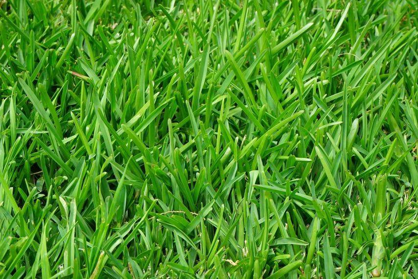 Как правильно выбрать траву для лужайки