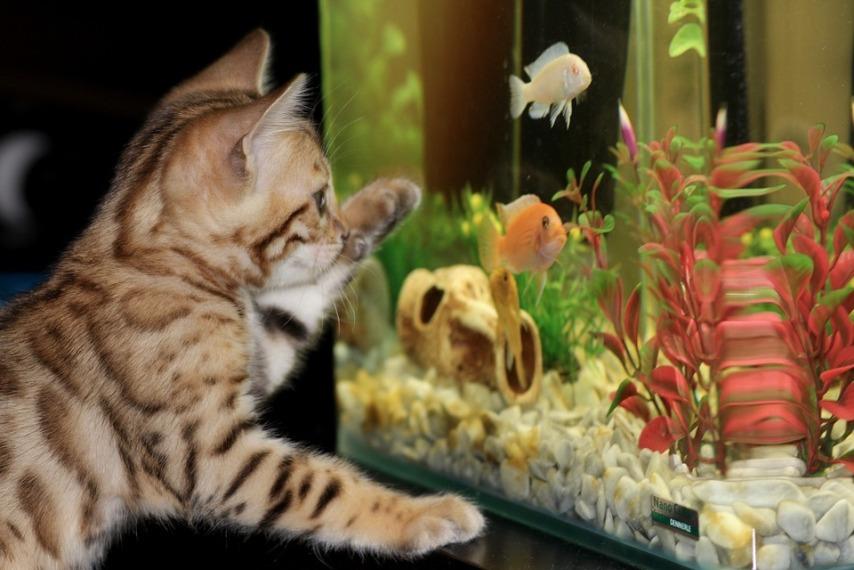 Увлажнение воздуха в помещении с помощью аквариума