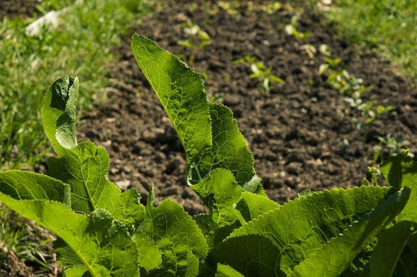 Как правильно создать первую грядку начинающему садоводу