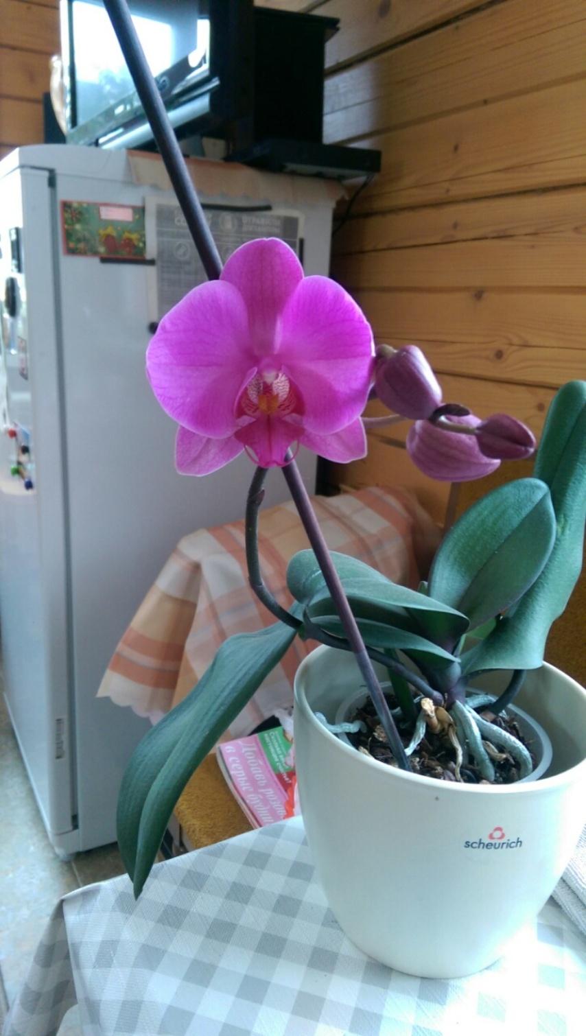 Яркий цветок сразу привлекает к себе внимание