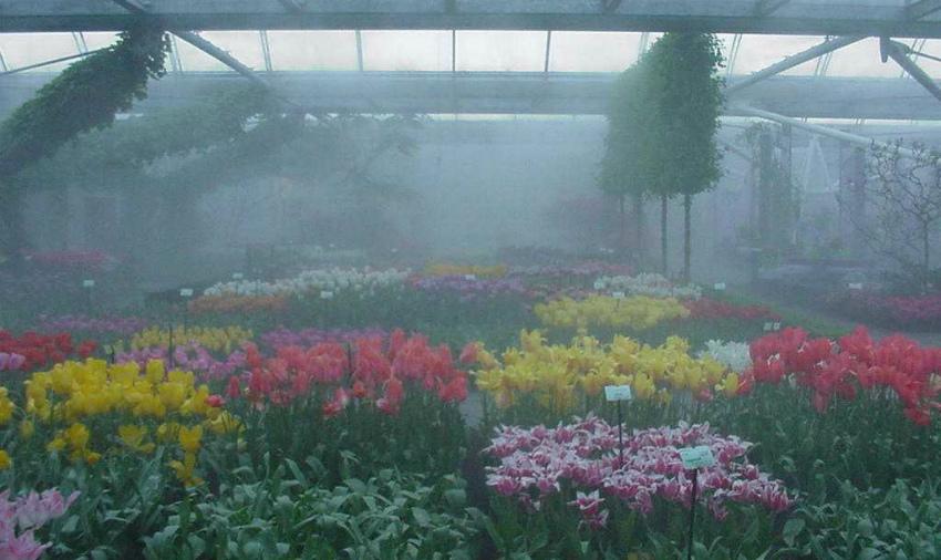 Цветы и туманообразование